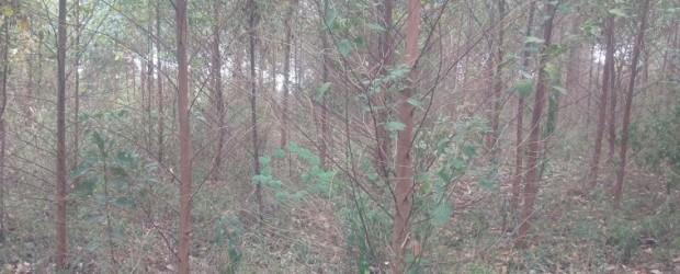 Busunju trees