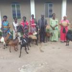 Goats at Bukuya